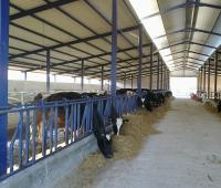 hayvan barınakları yapımı - Susurluk (1)