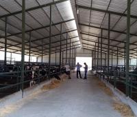 hayvan barınakları yapımı - Susurluk (2)
