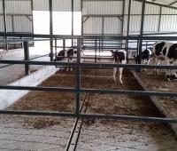 hayvan barınakları yapımı - Susurluk (5)