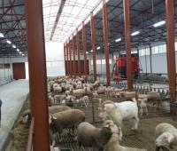 hayvan barınakları yapımı - Susurluk (6)