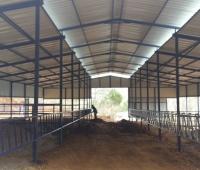 hayvan barınakları yapımı - Susurluk (7)