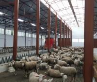 hayvan barınakları yapımı - Susurluk (8)